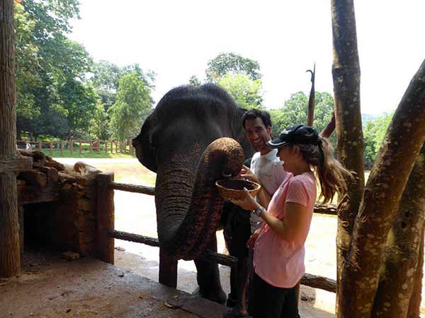 Testimonio de Viaje de novios a Sri Lanka y Maldivas de Andrea y Enrique: El orfanato de elefantes de Pinnawala