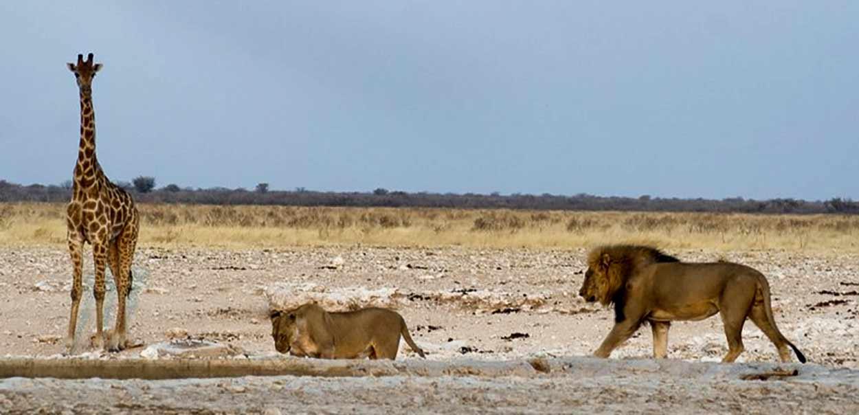 Etosha, el parque nacional más importante del turismo de Namibia.