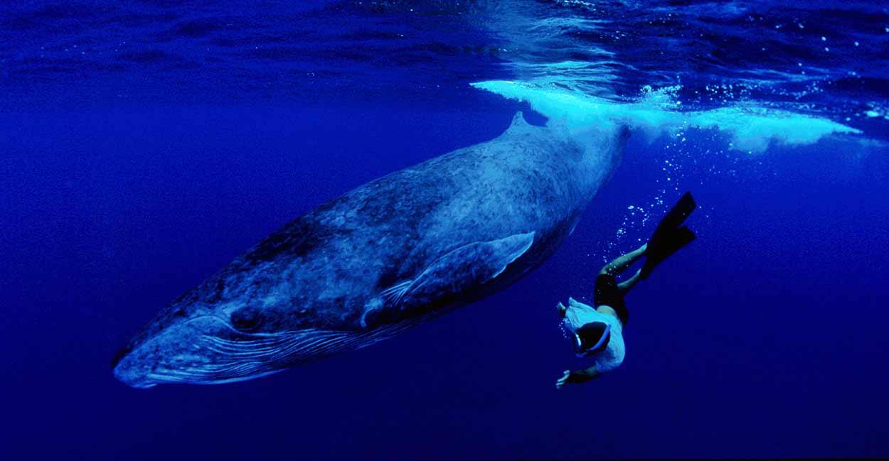 Rurutu es la más poblada y visitada, dado que sus aguas son lugar de reproducción de la ballena jorobada, un hito turístico para islas Australes