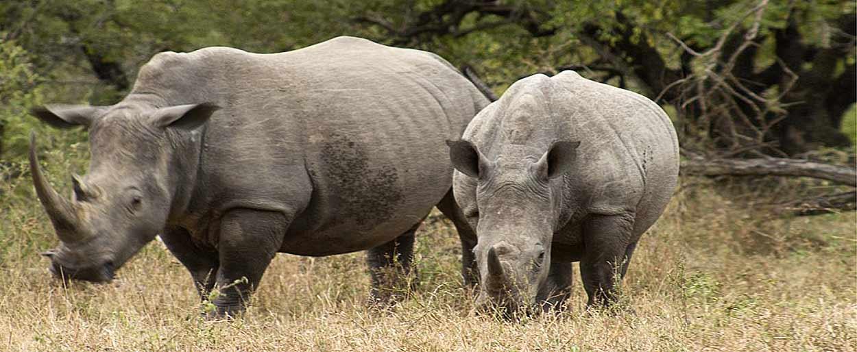 Kruger, el parque nacional más importante del turismo de Sudáfrica
