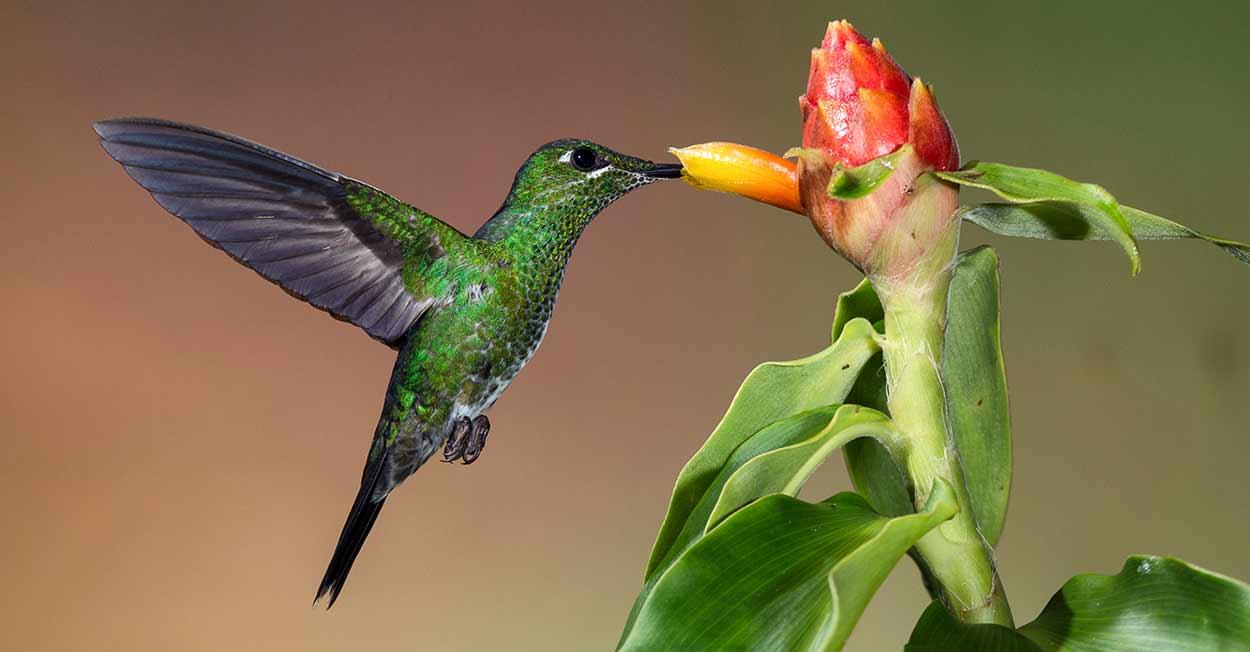 Turismo de Costa Rica, un paraíso para los birdwatchers Michael L. Baird, flickr.bairdphotos.com [CC BY 2.0], via Wikimedia Commons