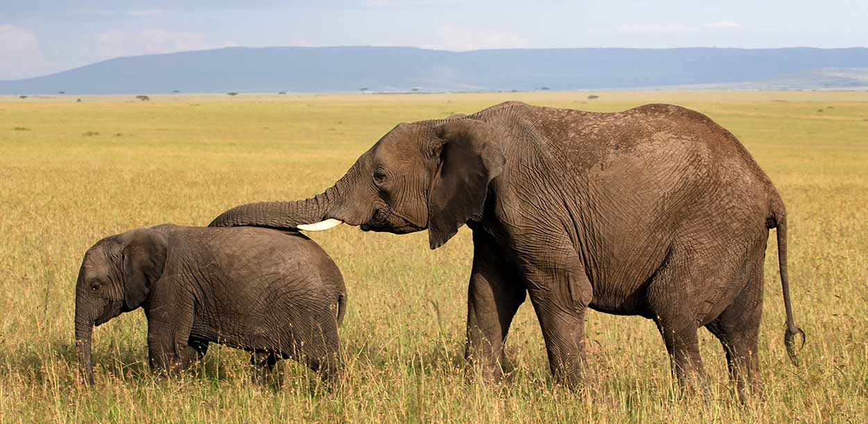 Turismo de Kenia: Aquí comenzó la industria del safari africano