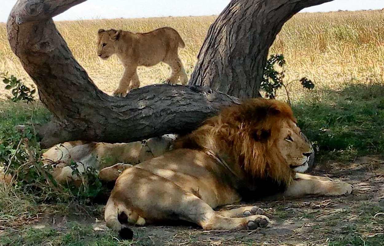 Turismo en Tanzania: el mejor destino del continente para safaris