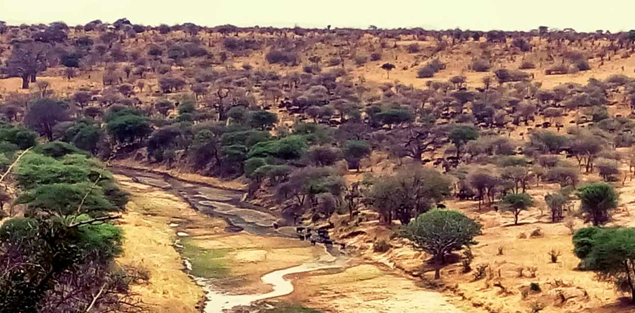 Reserva de Selous, la joya del sur de turismo en Tanzania, es Patrimonio de la Humanidad de la UNESCO debido a su apabullante biodiversidad