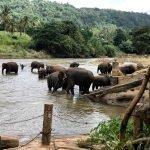 Viaje a Sri Lanka y Maldivas de Paola y Alfonso 17