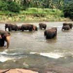Viaje a Sri Lanka y Maldivas de Paola y Alfonso 19