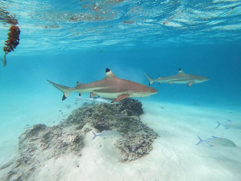 Viaje a Polinesia de Rocío y Simone 10