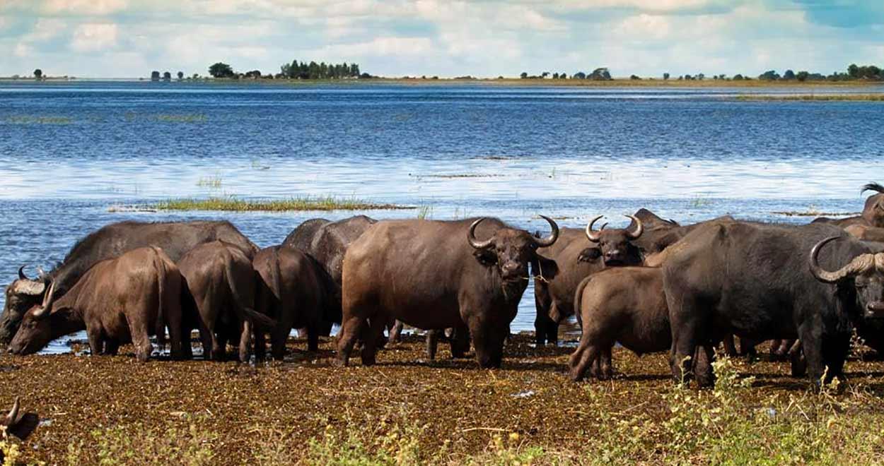 Safari Botswana Norte y Cataratas Victoria