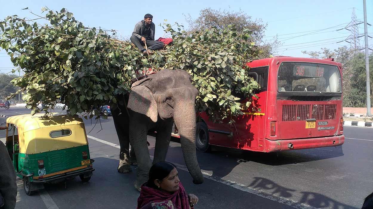 India por libre - Amit88265