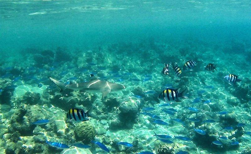 Viaje a Sri Lanka y Maldivas de Mari, Elena, Diego y José Carlos 05