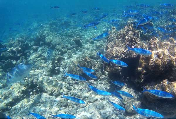 Valoración de viaje a Sri Lanka y Maldivas de Mari, Elena, Diego y José Carlos - una foto más de sesiones de buceo en Maldivas