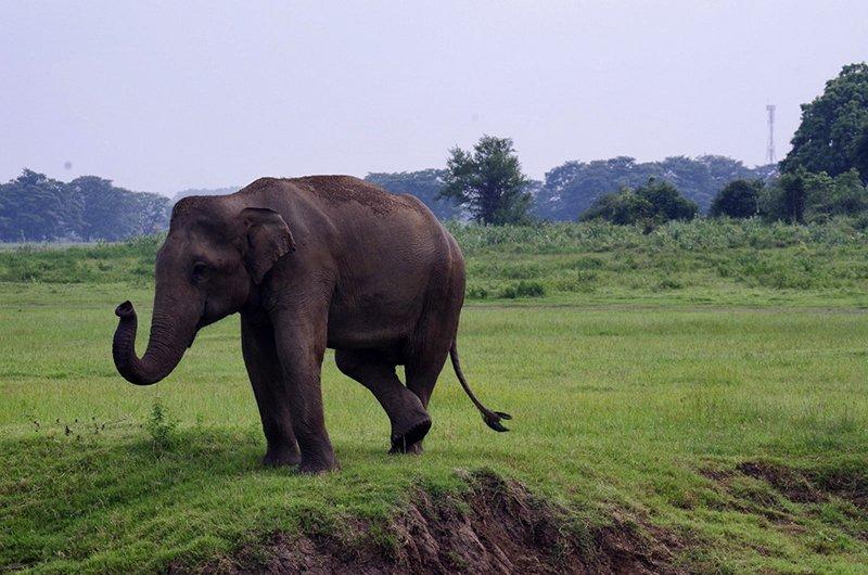 Viaje a Sri Lanka y Maldivas de Mari, Elena, Diego y José Carlos 09