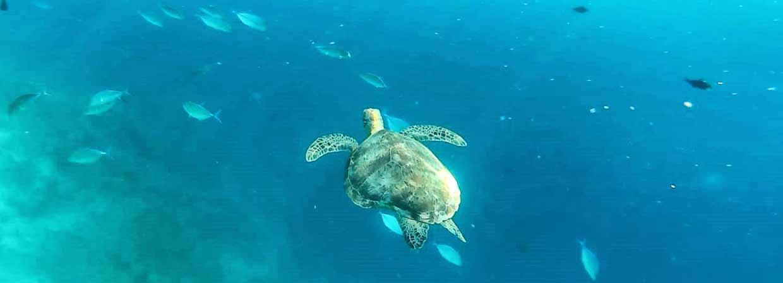 Valoración de viaje a Sri Lanka y Maldivas de Mari, Elena, Diego y José Carlos - fotografía submarina, hecha durante buceo en Maldivas por nuestros viajeros sagaces