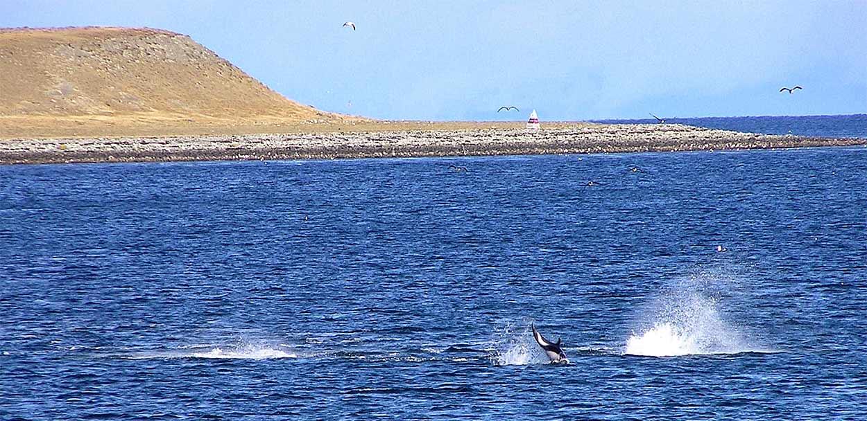 Delfines en el Estrecho de Magallanes - TURISMO ACTIVO EN PATAGONIA DE ARGENTINA Y CHILE