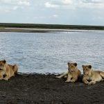 Safari en privado de Tanzania de Yajaira y Pino 01