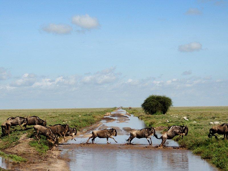 Safari en privado de Tanzania de Yajaira y Pino 02
