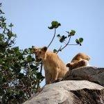 Safari en privado de Tanzania de Yajaira y Pino 03