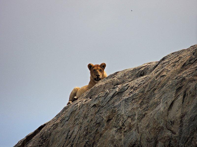 Safari en privado de Tanzania de Yajaira y Pino 04