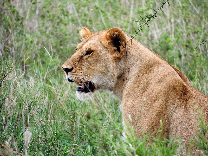 Safari en privado de Tanzania de Yajaira y Pino 05