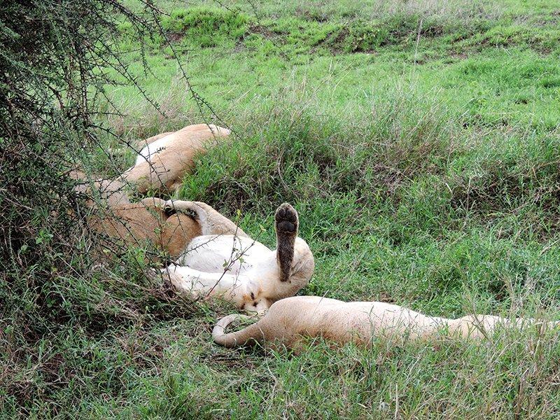 Safari en privado de Tanzania de Yajaira y Pino 06