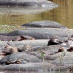 Safari en privado de Tanzania de Yajaira y Pino 07