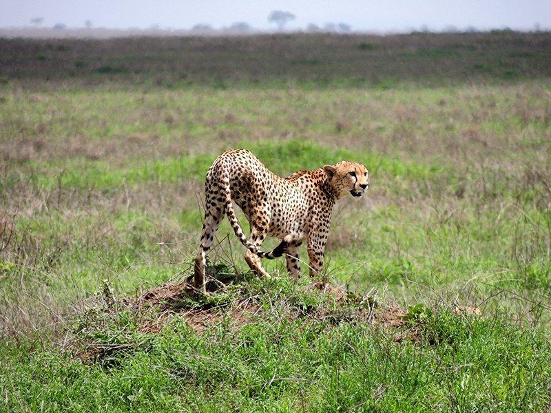 Safari en privado de Tanzania de Yajaira y Pino 08