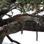 Safari en privado de Tanzania de Yajaira y Pino 09