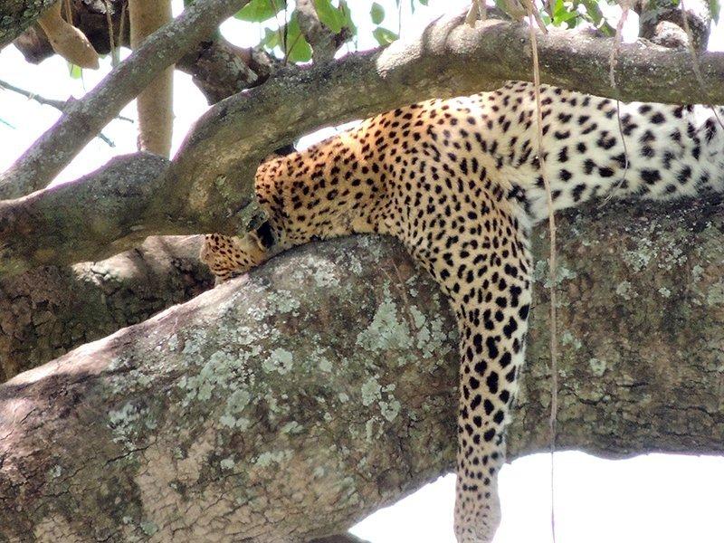 Safari en privado de Tanzania de Yajaira y Pino 10