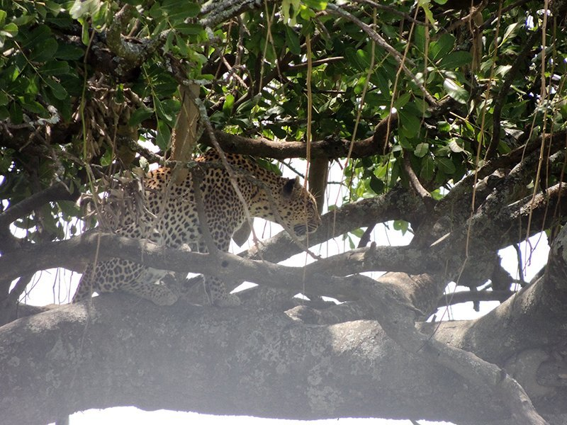 Safari en privado de Tanzania de Yajaira y Pino 11