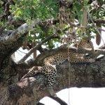 Safari en privado de Tanzania de Yajaira y Pino 12