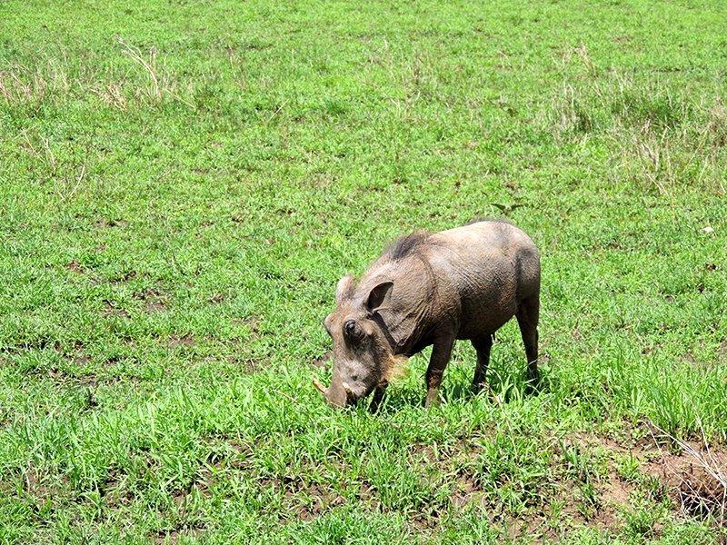 Safari en privado de Tanzania de Yajaira y Pino 13