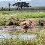 Safari en privado de Tanzania de Yajaira y Pino 14