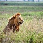Safari en privado de Tanzania de Yajaira y Pino 15