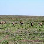 Safari en privado de Tanzania de Yajaira y Pino 17