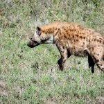 Safari en privado de Tanzania de Yajaira y Pino 18