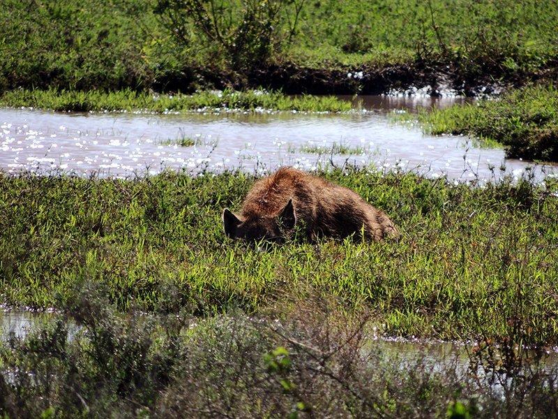 Safari en privado de Tanzania de Yajaira y Pino 19