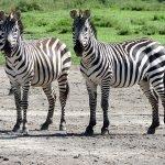 Safari en privado de Tanzania de Yajaira y Pino 20