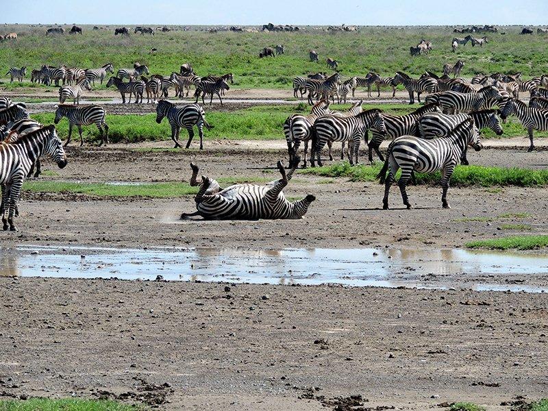 Safari en privado de Tanzania de Yajaira y Pino 21