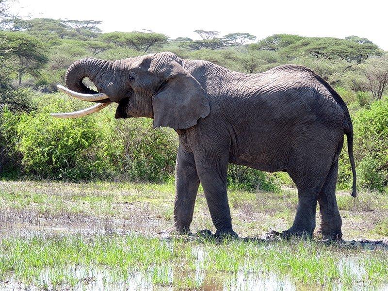 Safari en privado de Tanzania de Yajaira y Pino 23