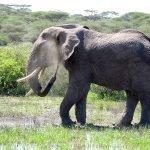 Safari en privado de Tanzania de Yajaira y Pino 24