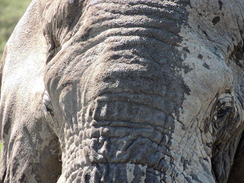 Safari en privado de Tanzania de Yajaira y Pino 25