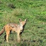 Safari en privado de Tanzania de Yajaira y Pino 26