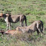 Safari en privado de Tanzania de Yajaira y Pino 27