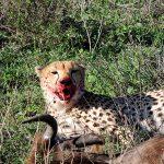 Safari en privado de Tanzania de Yajaira y Pino 28