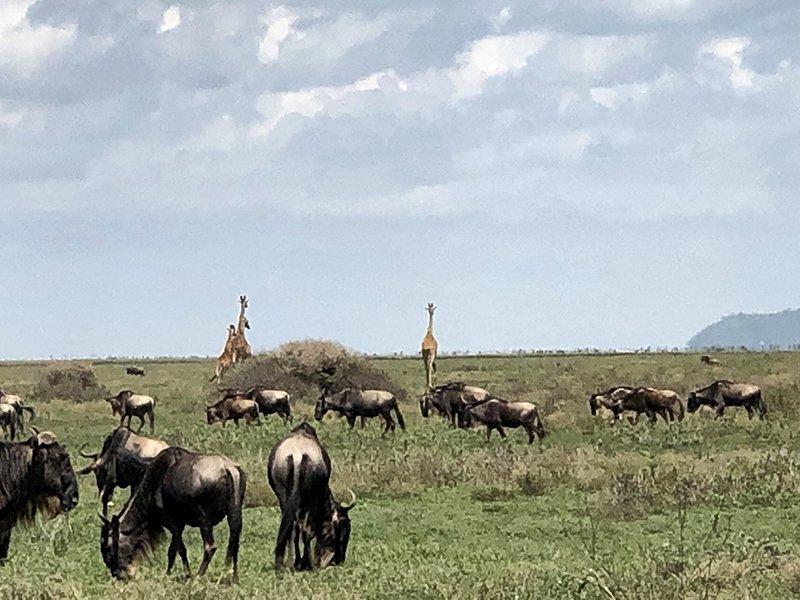 Safari en privado de Tanzania de Yajaira y Pino 29