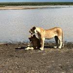 Safari en privado de Tanzania de Yajaira y Pino 30