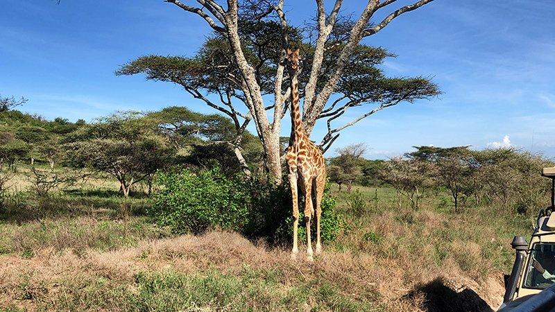 Safari en privado de Tanzania de Yajaira y Pino 32