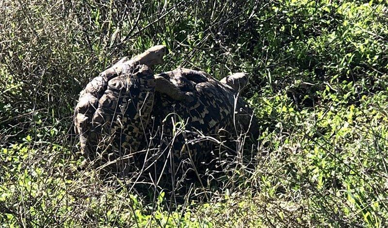 Safari en privado de Tanzania de Yajaira y Pino 34