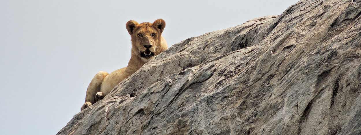 Valoración de safari en privado de Tanzania de Yajaira y Pino