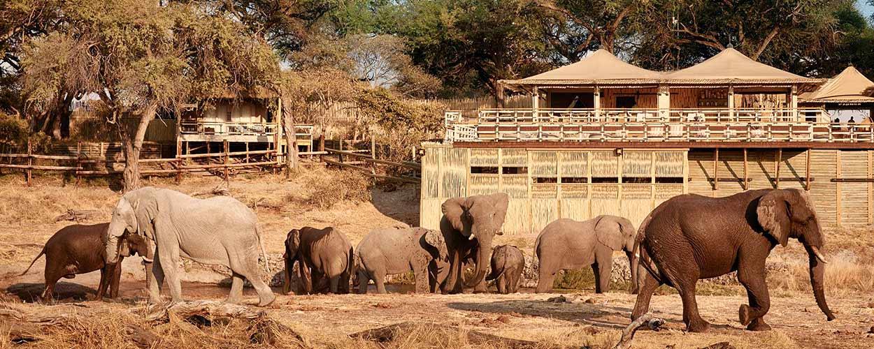 SAFARI DE GRAN LUJO EN BOTSWANA Y CATARATAS VICTORIA - BELMOND SAVUTE ELEPHANT LODGE (Foto: cadena de lodges de Belmond)